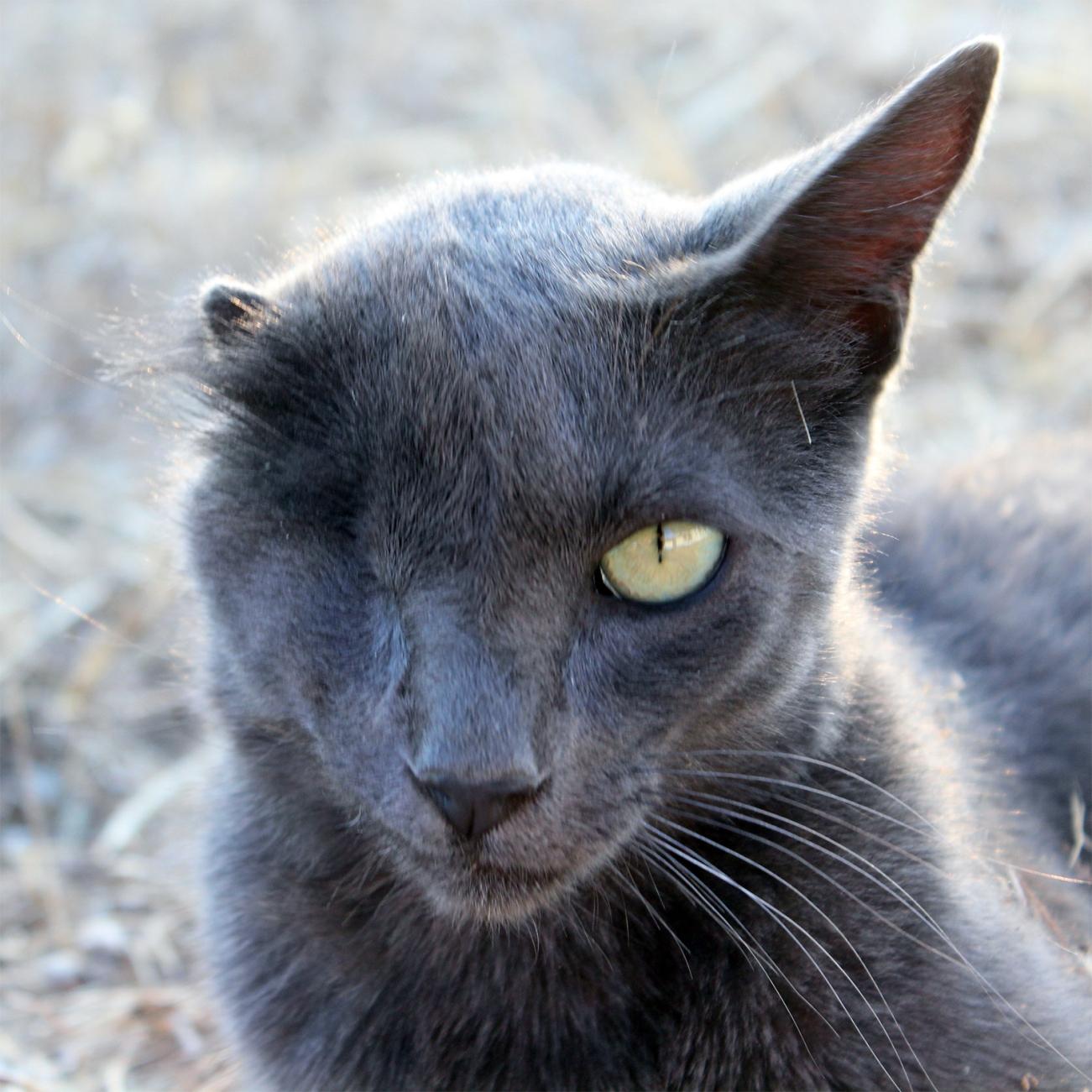 Flor the cat